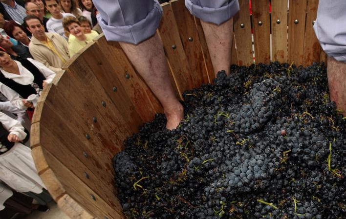 Pisada tradicional de uvas para hacer vino de Cangas en la Fiesta de la Vendimia del Vino de Calidad de Cangas del Narcea.